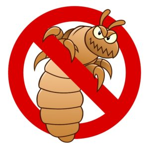 Parent Head Lice Guide Final